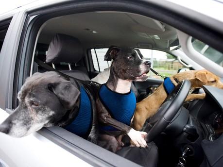 Top 3 Best Vans for Dog Groomers & Walkers