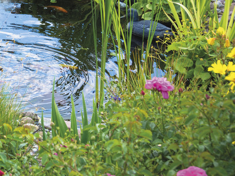 Create a wildlife-friendly water garden