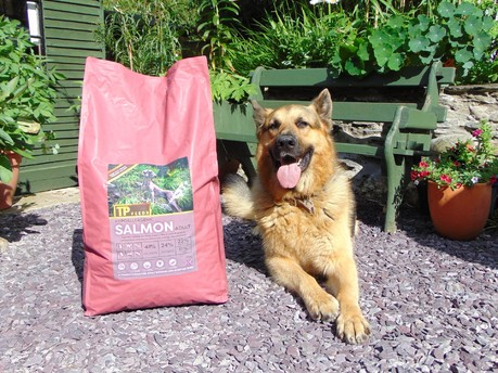 Real food for your four-legged best friend