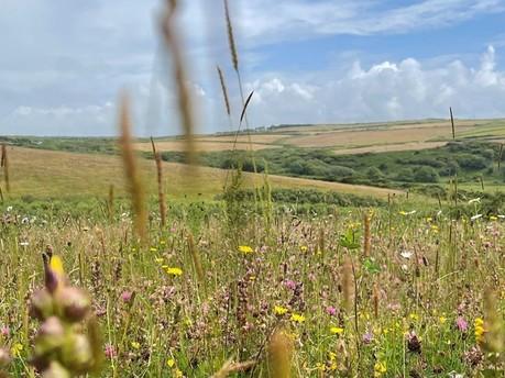 National Trust Cymru bags Southwood Estate funding