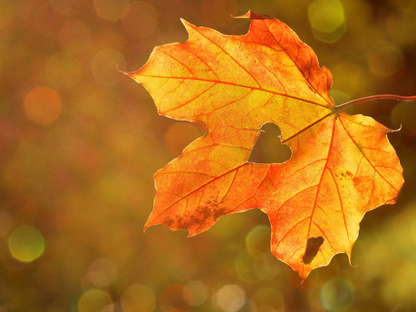 What's on in West Sussex this Autumn