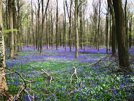 Get Outdoors In West Sussex This Springtime